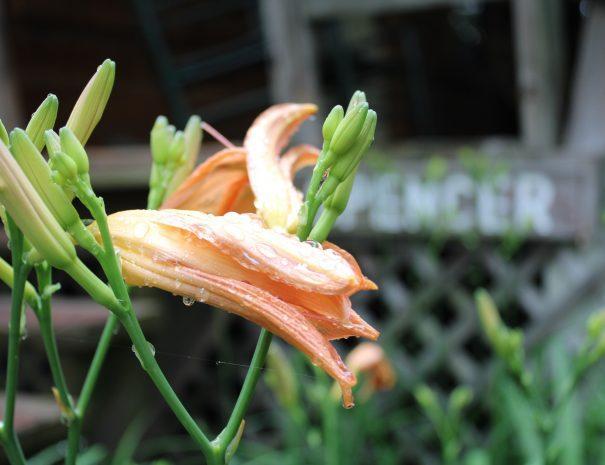 Spencer Cabin Flowers Outside
