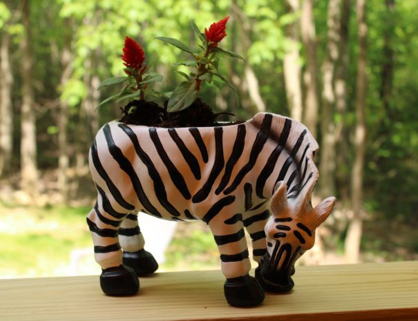 Safari Sun Zebra Planter